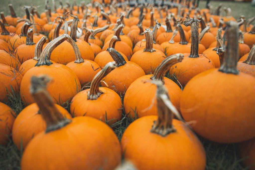 pumpkins in field health benefits